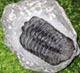 De eerste fossielen mens