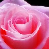12 citaten over de liefde